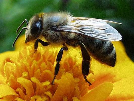 A leggyakoribb rovarcsípések és ellátásuk