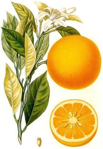 Édes narancs olaj