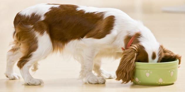 Állatgyógyászat! Betegséget okozó kutyaeledelek